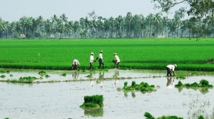andhra-pradesh-top-10-largest-rice-producing-states-in-india-2017