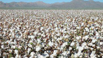 chinatop-most-popular-largest-cotton-producing-countries-in-the-world-2019