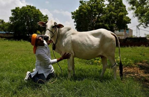 haryana, Top 10 Highest Milk Producing States in India 2018