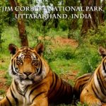 Top 10 Best National Park and Wildlife Sanctuaries in India