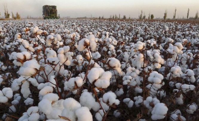 maharashtra-top-best-largest-cotton-producing-states-in-india-2018