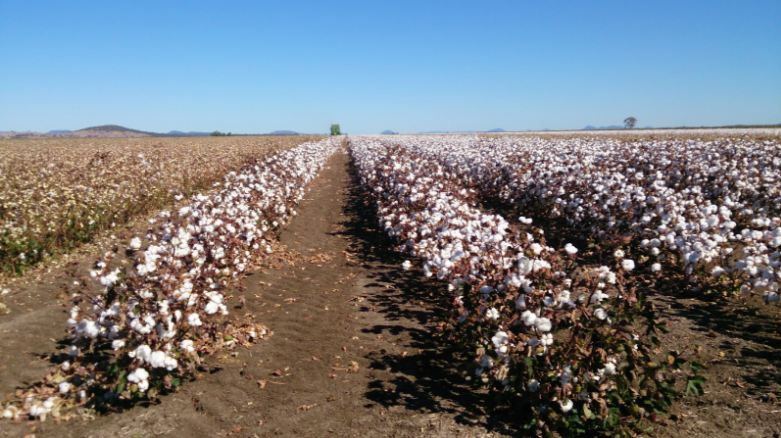 united states of america, Top 10 Largest Cotton Producing Countries in The World 2018