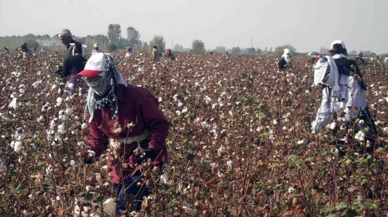 uzbekistan, Top 10 Largest Cotton Producing Countries in The World 2018