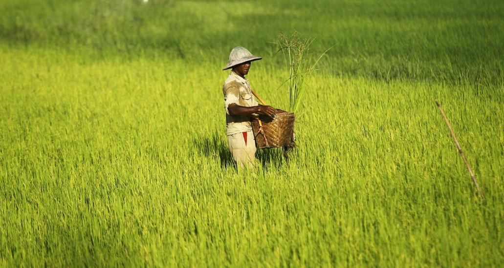 Burma Top Popular Rice Producing Countries in The World 2018