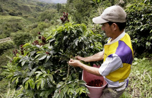 COLOMBIA Top Most Coffee Producing Countries in The World 2017