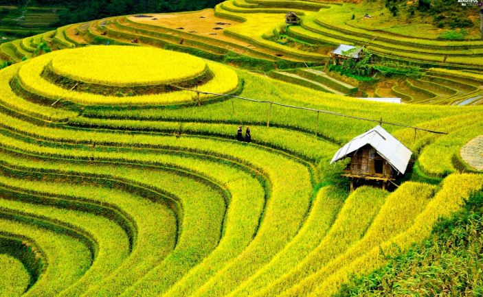 China Top Most Popular Rice Producing Countries in The World 2018