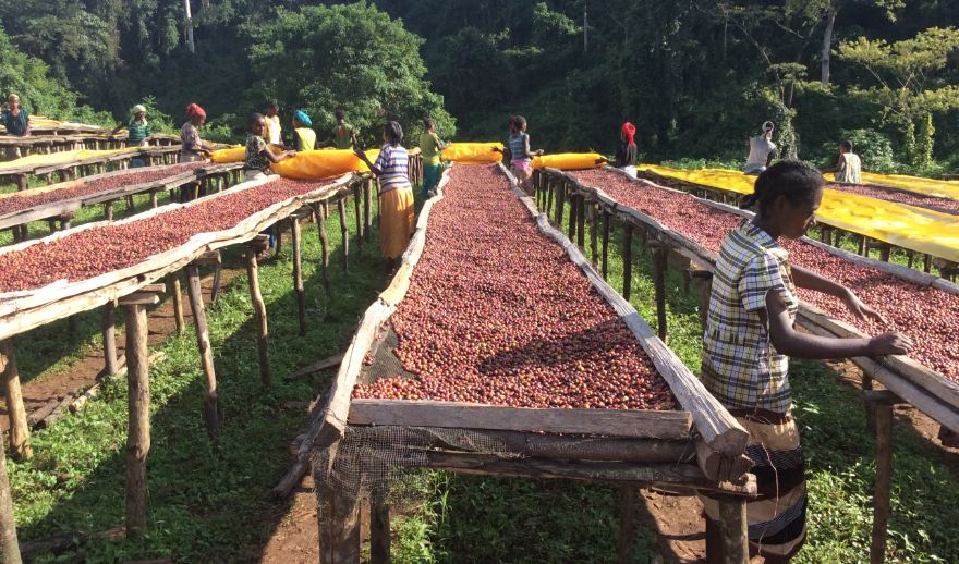 ETHIOPIA Top Most Popular Coffee Producing Countries in The World 2018