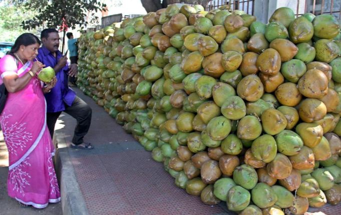 INDIA Top Most Coconut Producing Countries in The World 2017