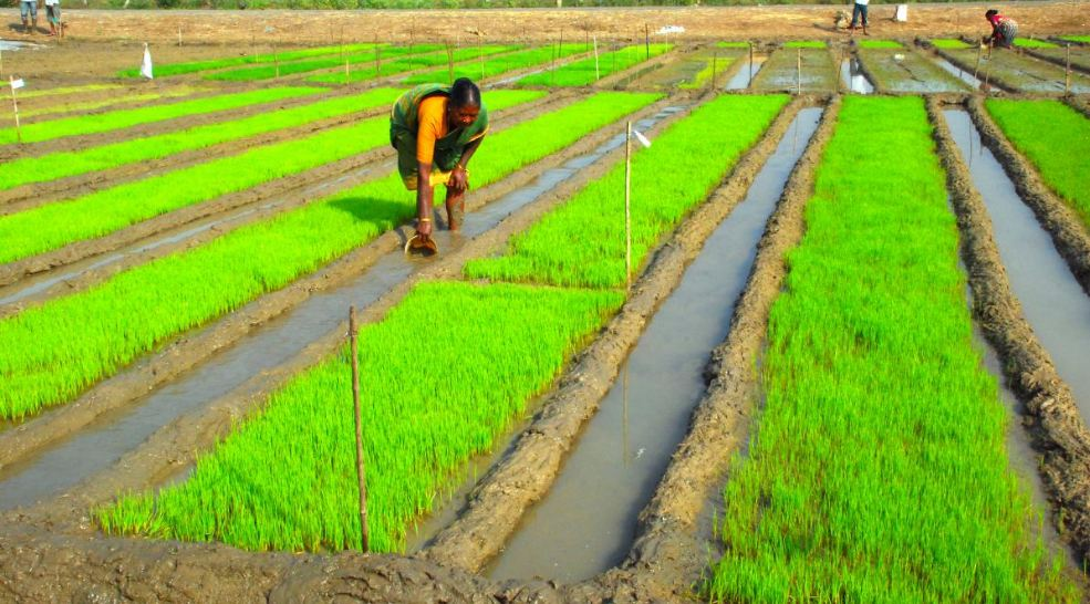 India Top Famous Rice Producing Countries in The World 2019