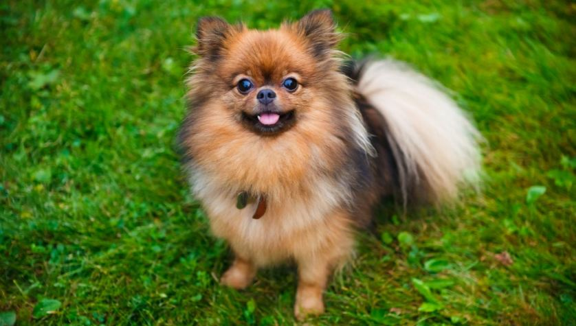 World's Top 10 Most Beautiful Dog Breeds 2017