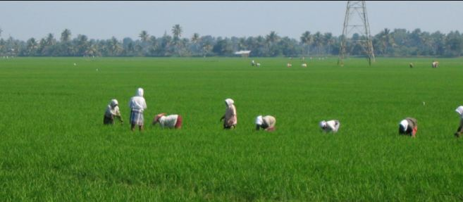 Largest Rice Producing States in India 2019