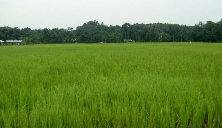 Largest Rice Producing States in India