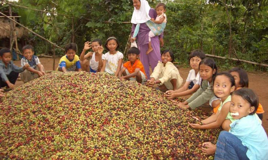 Largest Coffee Producing Countries