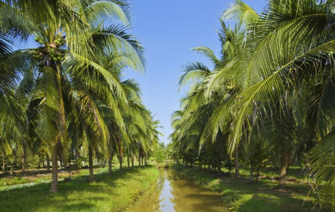 Largest Coconut Producing Countries