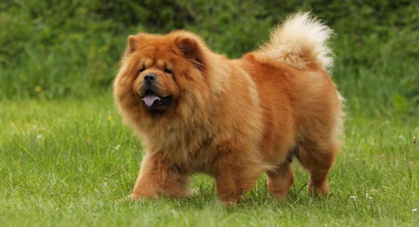 Most Beautiful Dog Breeds 2019